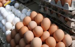 Yumurta qabığının inanılmaz faydaları