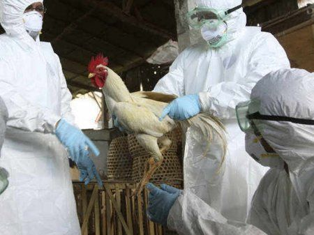 Czech Republic reports first H5N8 bird flu case