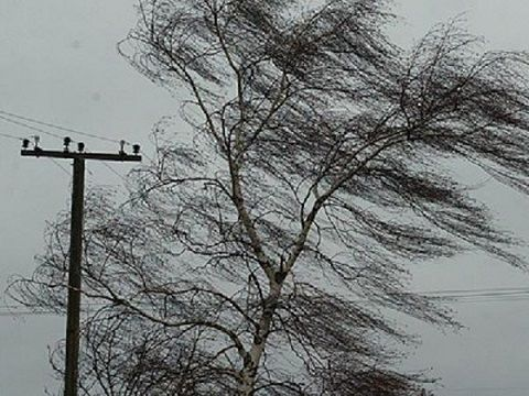 Bakıda külək ağacı aşırdı - Foto