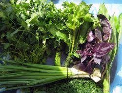 Как правильно сочетать зелень в салате