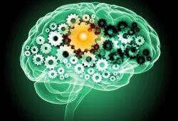 Half of women will develop dementia