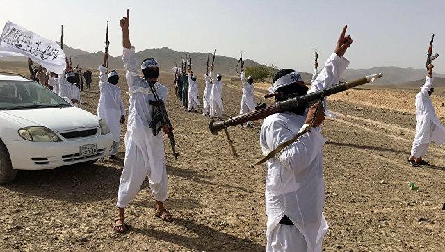 Талибы объявили большую амнистию к Курбан-байрам