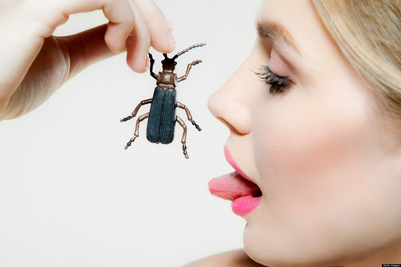 Insects decline: What do insects actually do? -