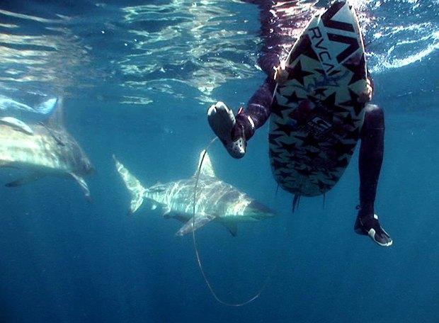 В Австралии акула загрызла 17-летнего серфера