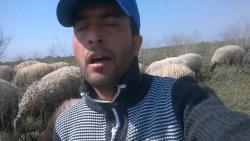 Məşhur çoban qoyunlarını satıb klip çəkdirdi - Video