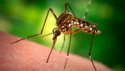 Чем может быть опасен укус комара