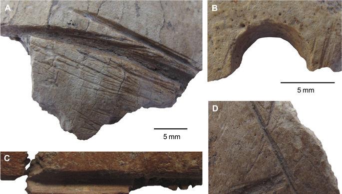 В Турции найдены черепа времен неолита