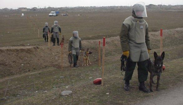 В Джоджуг Марджанлы 300 га очищены от мин и НРБ
