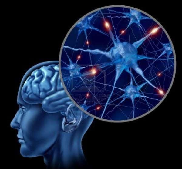 Что нашли в мозге людей с болезнью Альцгеймера?
