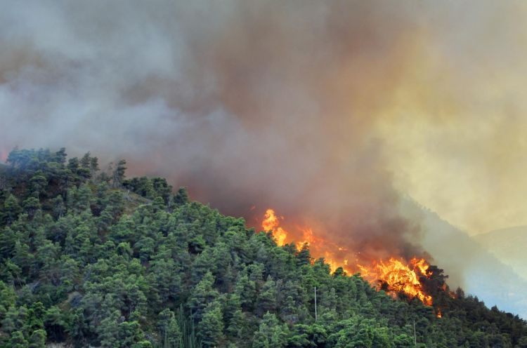 The fire was extinguished in Hirkan National Park