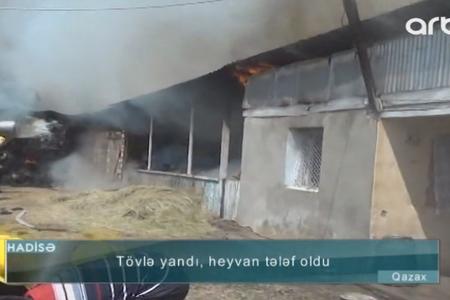 Qazaxda tövlə mal-qarayla birlikdə yanaraq kül oldu - Video