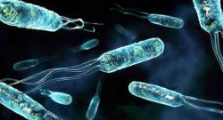 Ученые предсказали, какая эпидемия наступит в будущем