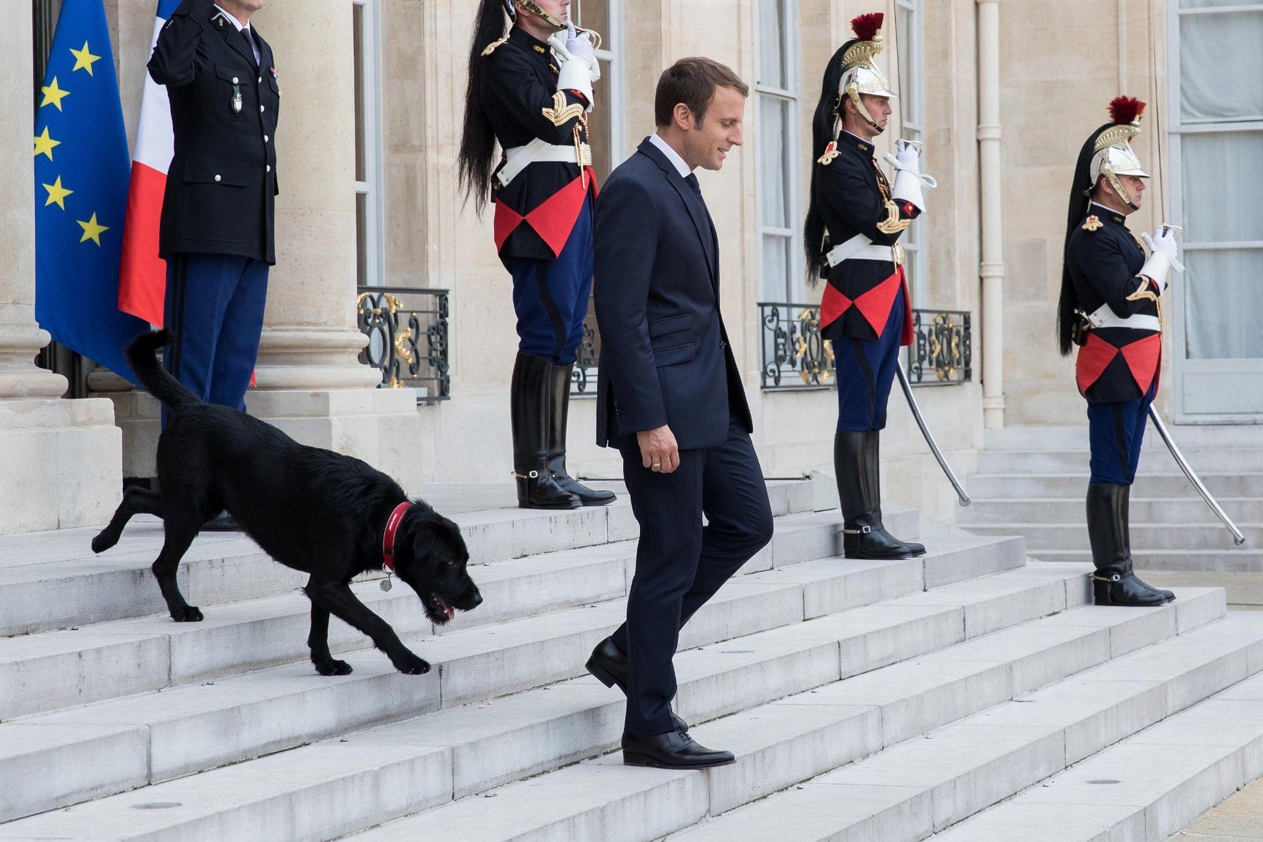 Собака Макрона помешала совещанию - Видео