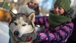 Владение собакой продлевает жизнь человеку