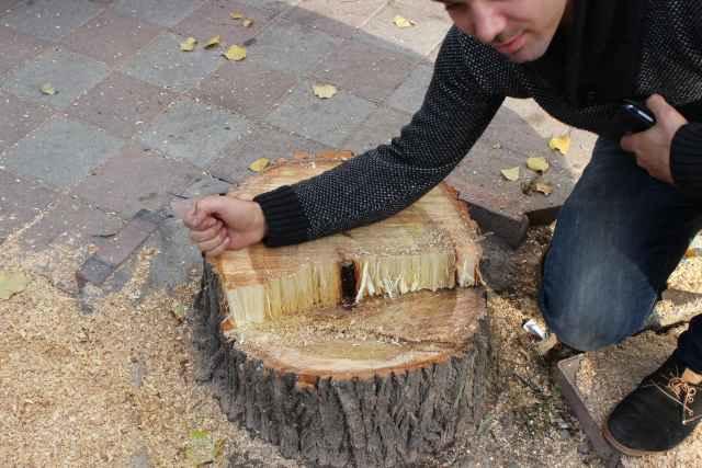 """""""Cənnət bağı""""nda ağac kəsildi, cinayət işi başladı"""