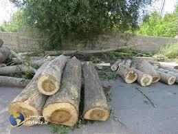 Tikinti məqsədilə ağacları kəsdilər, nazirlik hərəkətə keçdi