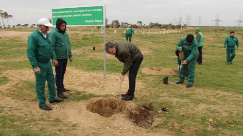 Nazir ağac əkdi - Foto