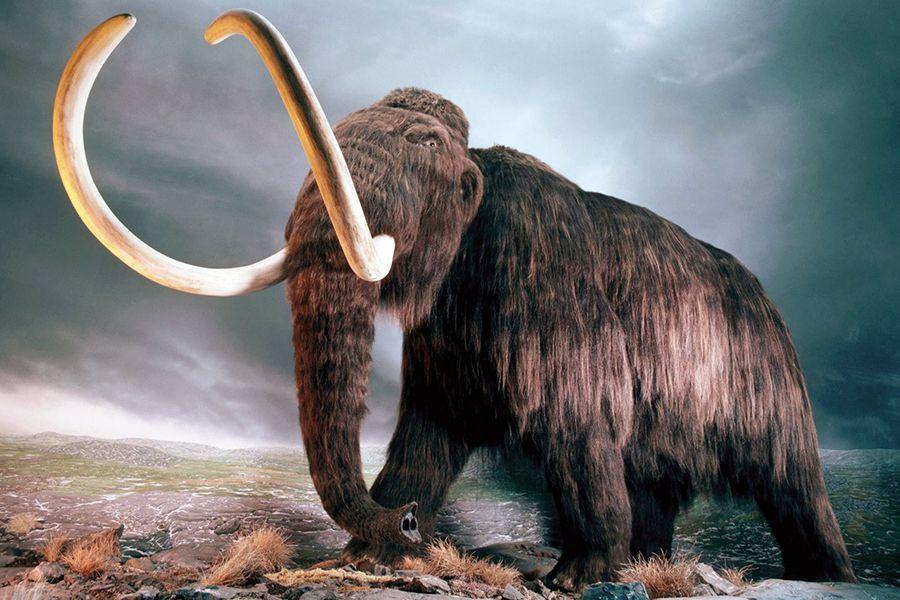 Сибирского мамонта продали во Франции за €548 тыс