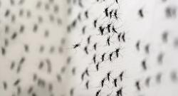 First sexually transmitted Zika virus confirmed