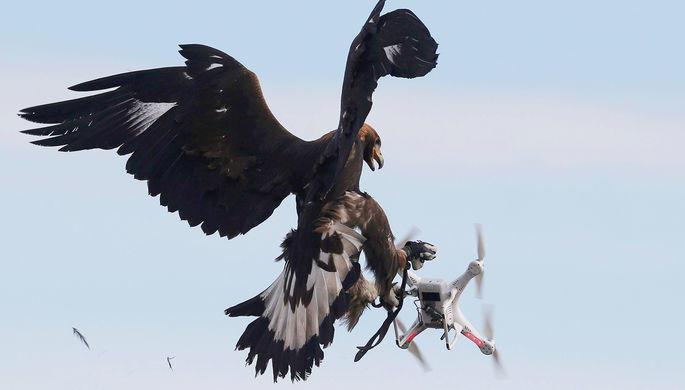 В России создали дроны-разведчики размером с ладонь