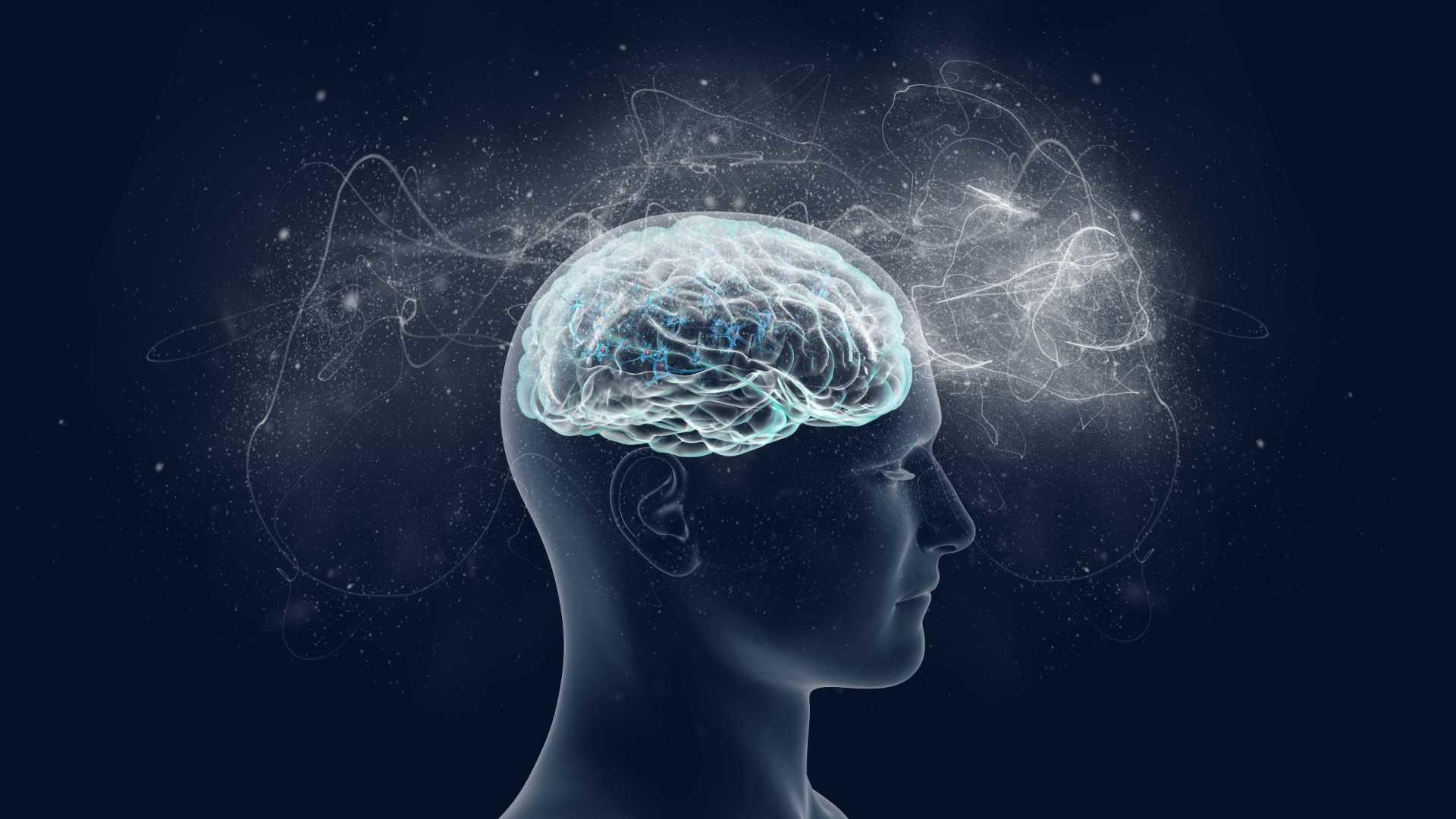 Учёные рассказали, как мысли движутся через мозг