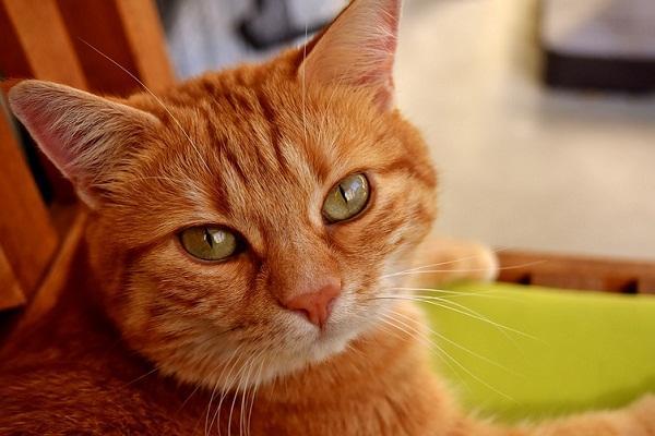 Пропавший кот вернулся к хозяину через 14 лет