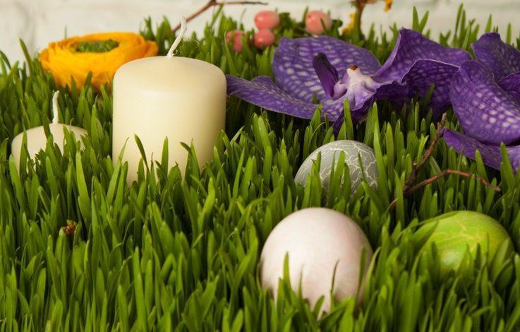 نووروز، گل ها، نووروز، گل...شعر