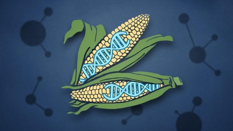 GMO məhsulları Azərbaycana haradan gətirilir?