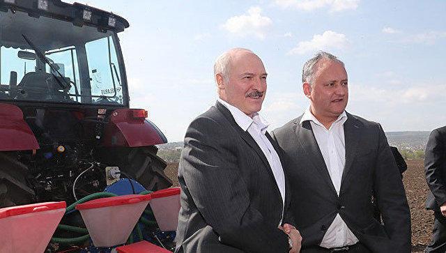 Лукашенко и Додон посадили кукурузу - Видео