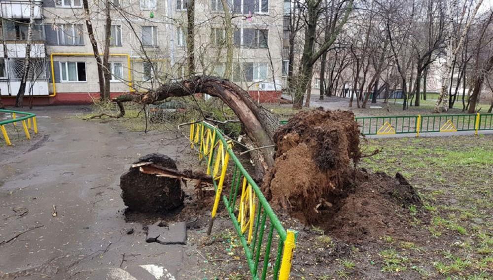 Moskvada dəhşətli qasırğa: ölən və yaralananlar var