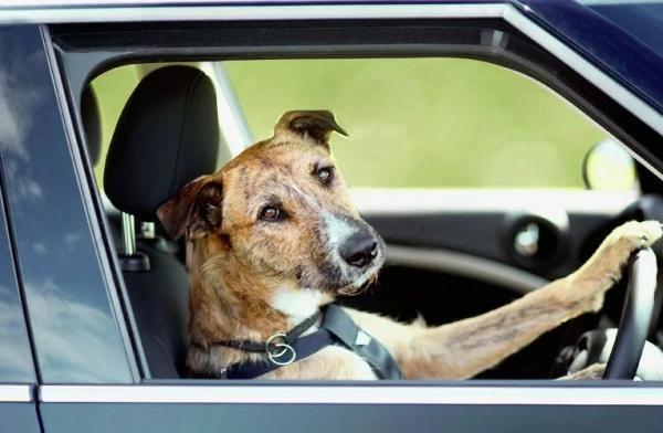 Пёс на грузовике протаранил магазин — Видео