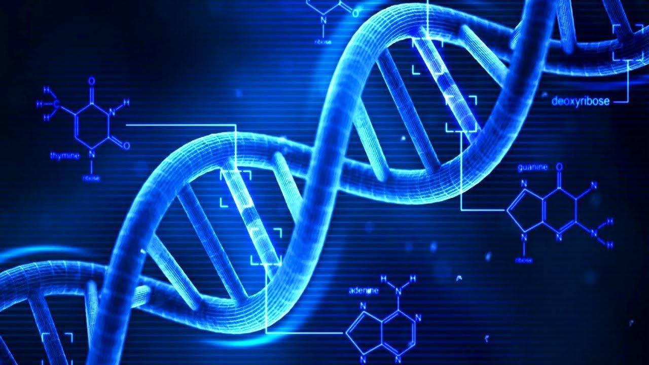 Ученые не нашли различий в генах людей и животных