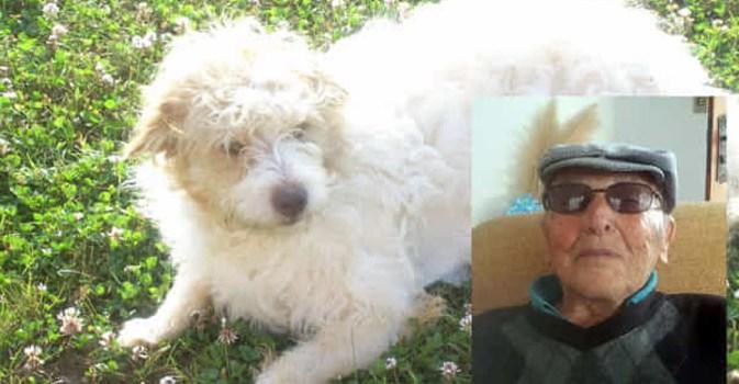 Итальянец завещал своей собаке €1 млн