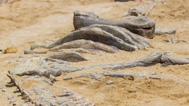 85 milyon illik dinozavr tapıldı - Foto