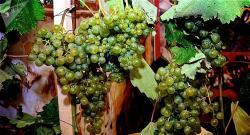 Десять преимуществ красного вина для красоты и здоровья