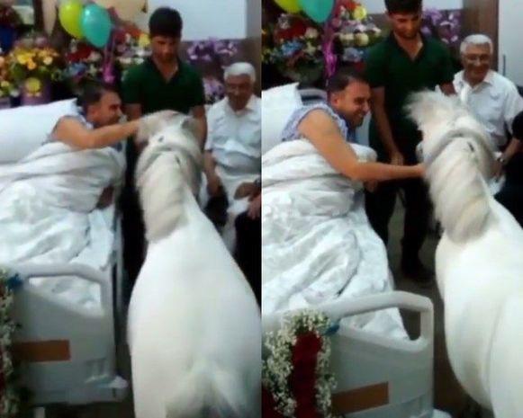 Hacı Nuranın palatasına niyə at gətirilmişdi?