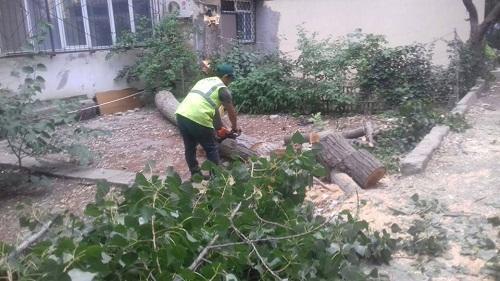 """Bakıda ağac """"qətliamı"""": sakinlər etiraz edir - Foto"""
