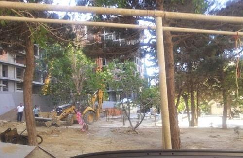 Yasamalda şirkət parkın ağaclarını kəsir - Foto
