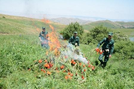 DSX: 1960 kiloqram xaş-xaş kolu məhv edildi