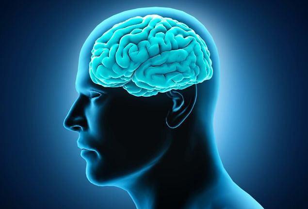 Ученые оживили мертвый мозг