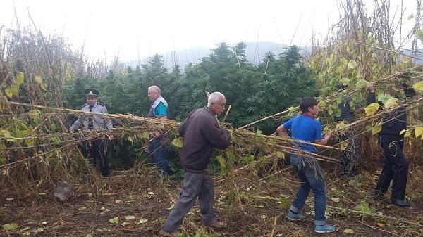 Balakəndə 1 ton 200 kq narkotik vasitə məhv edildi