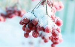 Продукты, которые полезнее есть зимой
