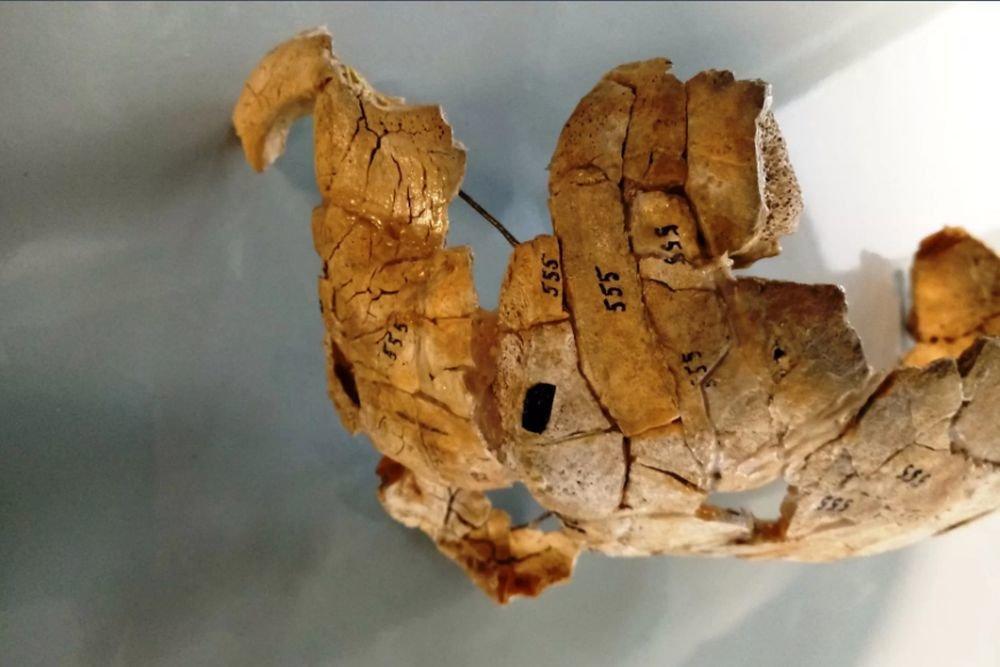В Польше раскрыли убийство 8000-летней давности
