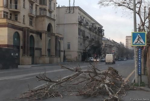 Ветер в Баку нанес первые ущербы
