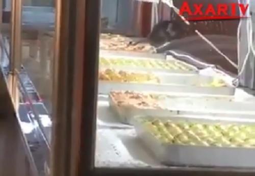 Vitrinində siçovul gəzən mağaza ilə bağlı qərar - Video