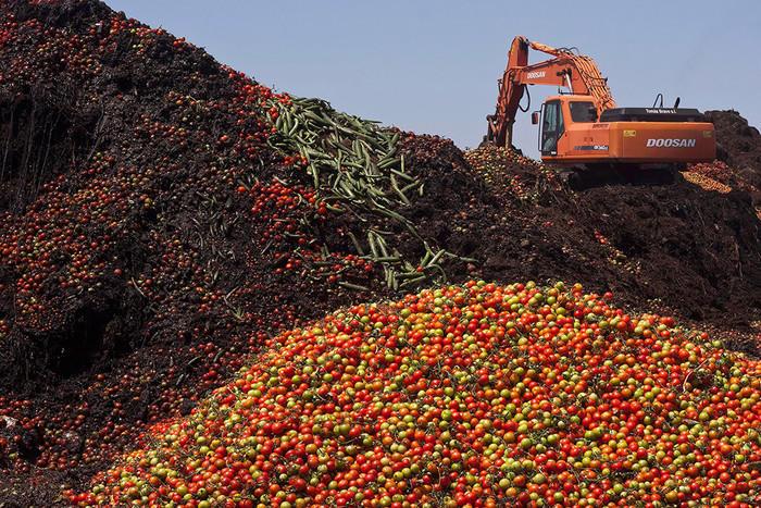 Россия ввела запрет на турецкие яблоки