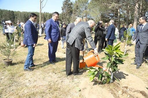 Jurnalistlər Sumqayıtda ağac əkdi