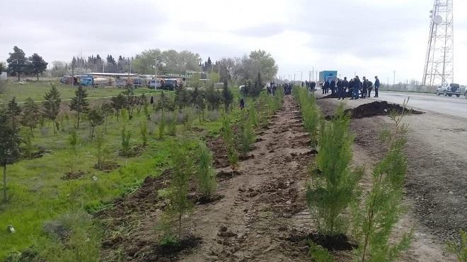 Azərbaycanda 1 milyondan çox ağac əkiləcək