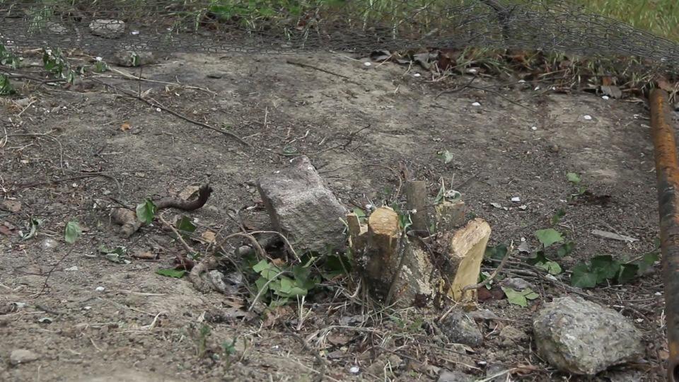 Qusarda ağaclar kəsildi, nazirlik hərəkətə keçdi