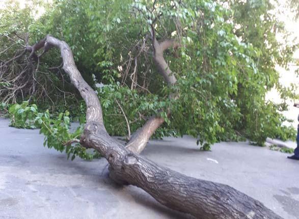 48 yaşlı kişi kəsdiyi ağacın altında qalıb öldü